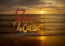 Flor-do-Caribe